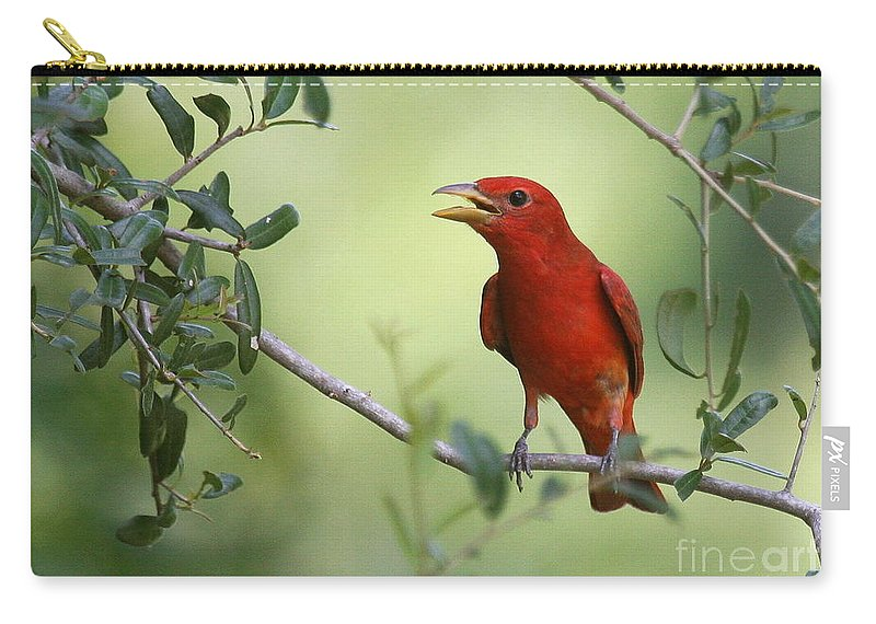 Birds Carry-all Pouch featuring the photograph Male Summer Tanager by Myrna Bradshaw