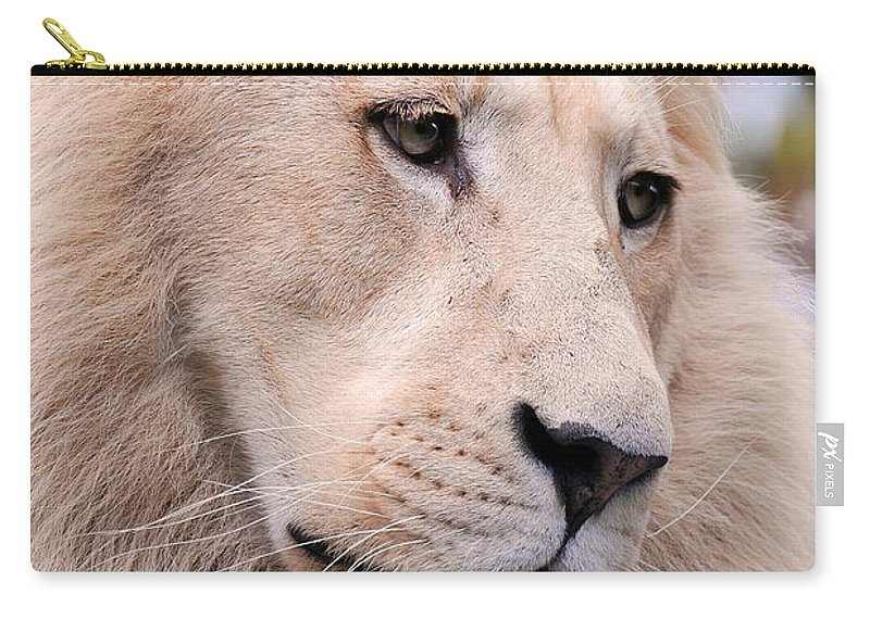 Stephanie Butler Carry-all Pouch featuring the photograph Male White Lion ... Thabo by Stephie Butler