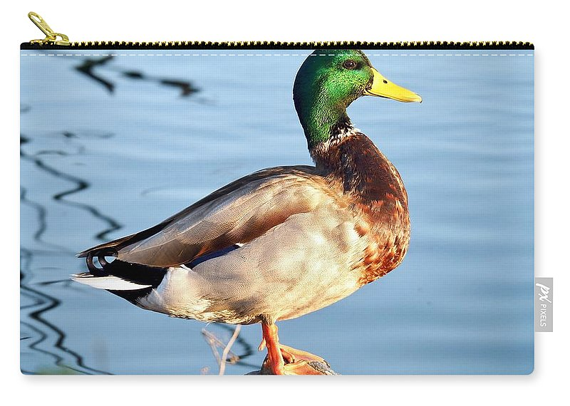 Travel Photography Carry-all Pouch featuring the photograph Mallard by Aaris K