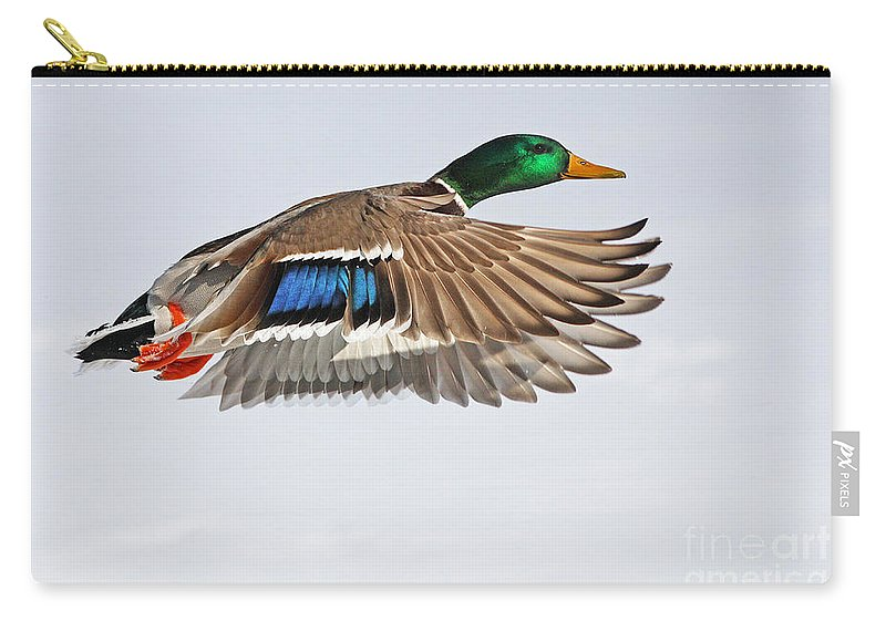 Mallard Duck In Flight Carry All Pouch For Sale By Mircea Costina Photography