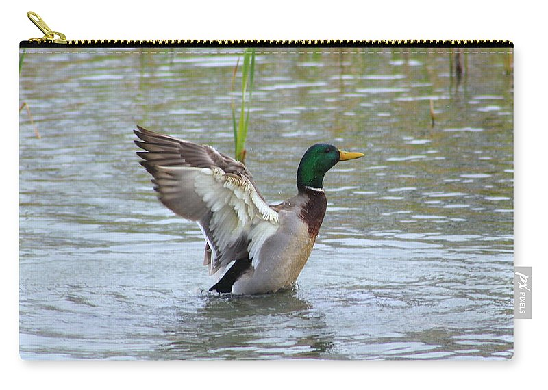Mallard Carry-all Pouch featuring the photograph Mallard Duck Landing In Pond by Anita Hiltz