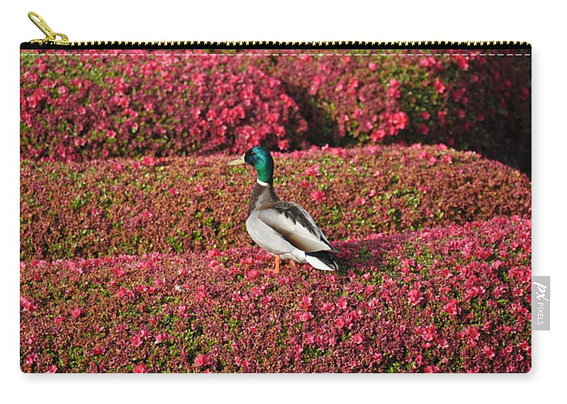 Bird Carry-all Pouch featuring the photograph Mallard On A Floral Carpet by Rich Bodane