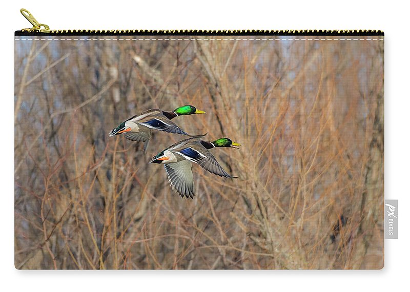 Ducks Carry-all Pouch featuring the photograph Mallard's In Flight by Kevin Esterline