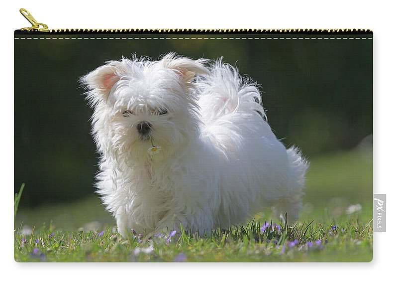 Maltese Carry-all Pouch featuring the photograph Maltese And Daisy by Jean-Luc Baron