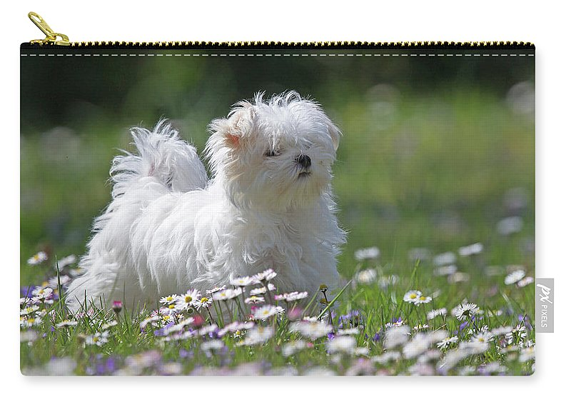 Maltese Carry-all Pouch featuring the photograph Maltese by Jean-Luc Baron