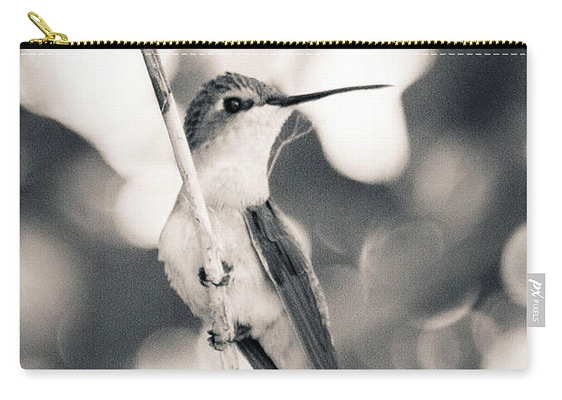 Bird Carry-all Pouch featuring the photograph Mama Hummingbird by Kelly Maize