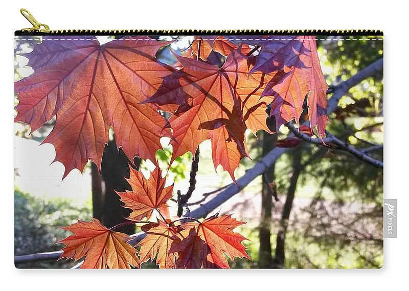 Maple Tree Carry-all Pouch featuring the photograph Maple by Aurora Bautista