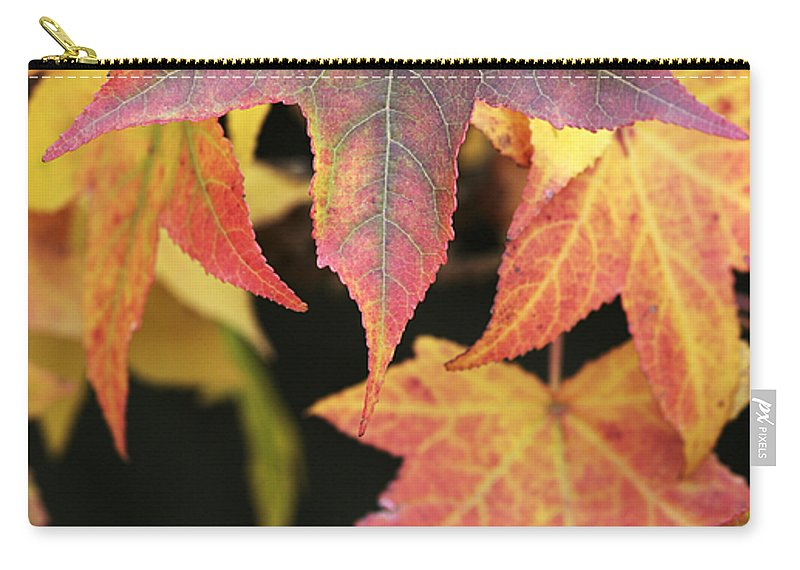 Maple Carry-all Pouch featuring the photograph Maple Leaves by Neil Overy