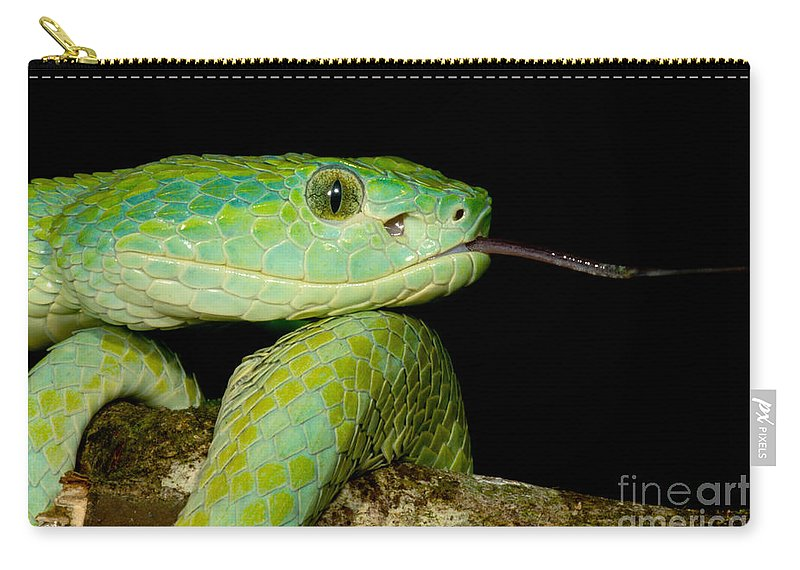 Bothriechis Marchi Carry-all Pouch featuring the photograph Marchs Palm Pitviper by Dant� Fenolio