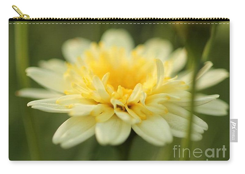 Mccombie Carry-all Pouch featuring the photograph Marguerite Daisy Named Madeira Crested Primrose by J McCombie