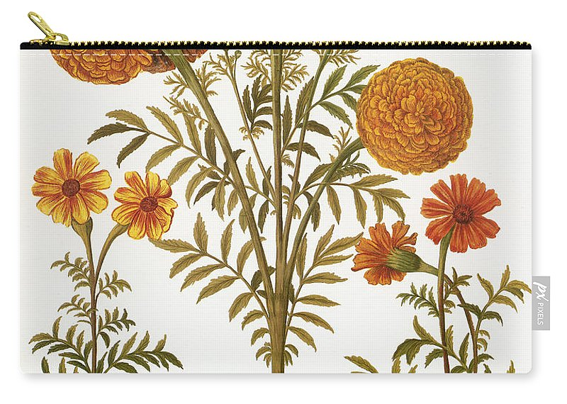 1613 Carry-all Pouch featuring the photograph Marigolds, 1613 by Granger