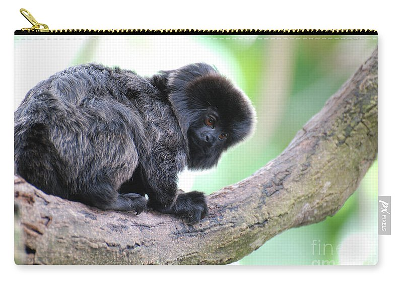 Goeldi Carry-all Pouch featuring the photograph Marmoset Sitting Perched In A Tree by DejaVu Designs