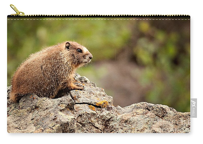 Colorado Carry-all Pouch featuring the photograph Marmot by Lana Trussell