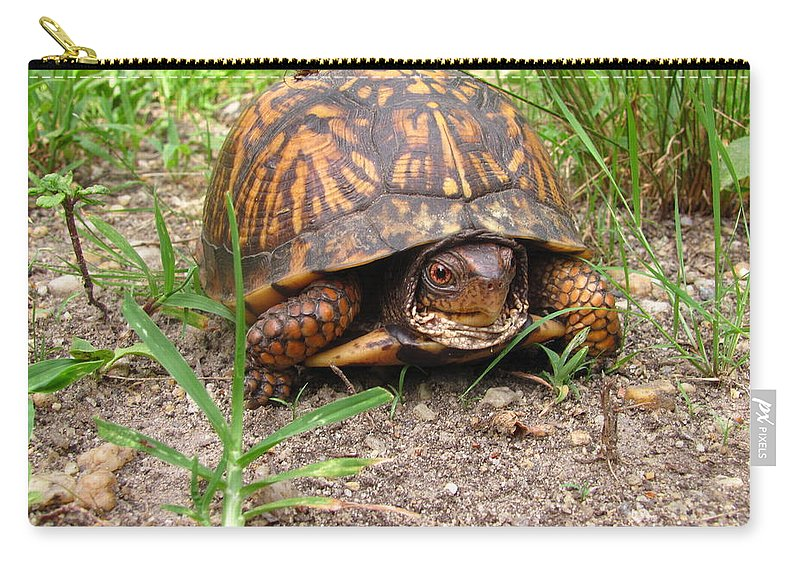 Eastern Box Turtle Images Maryland Box Turtle Photo Prints Maryland Reptile Images Maryland Reptile Photo Prints Forest Ecosystem Ecology Biodiversity Nature Images Nature Photo Prints Carry-all Pouch featuring the photograph Maryland Box Turtle by Joshua Bales