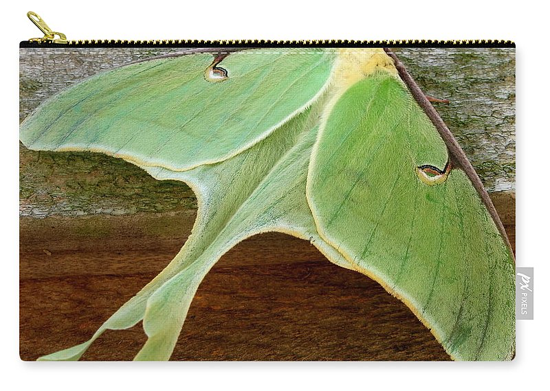 Maryland Luna Moth Images Giant Green Moth Images Luna Moth Photo Prints Entomology Forest Ecology Biodiversity Nature Big Green Moth Pictures Green Moth Photograph Prints Giant Green Moths Large Green Moths Images Nature Photography Naturalist Star Creatures Wildlife Habitat Conservation Oldgrowth Forest Protection Stop Sprawl Rare Prints Rare Moths Botany Horticulture Garden Insects Colorful Critter Prints Giant Green Moth Images Maryland Moth Identification Images Nature Prints Wild Prints Carry-all Pouch featuring the photograph Maryland Luna Moth by Joshua Bales