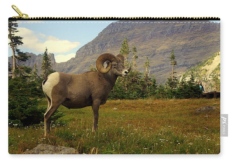 Big Horn Sheep Carry-all Pouch featuring the photograph Master Of His Domain by Marty Koch