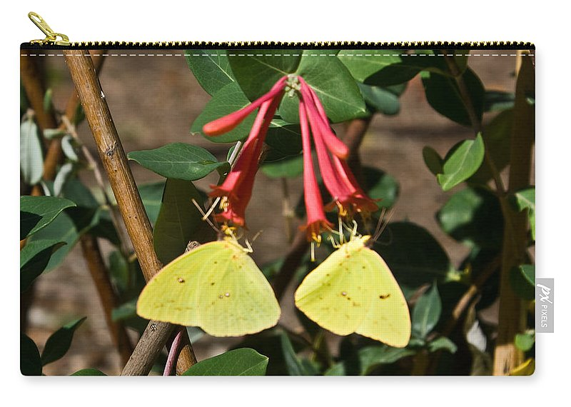 Sulfur Carry-all Pouch featuring the photograph Matched Pair Of Sulfur Butterflies by Douglas Barnett
