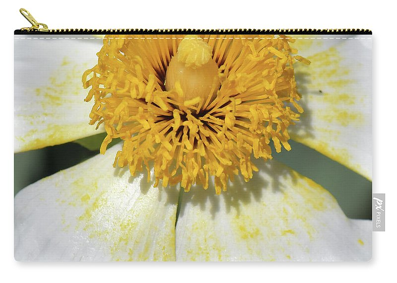 Nature Carry-all Pouch featuring the photograph Matilija Poppy 2- Macro by Becky Grassl