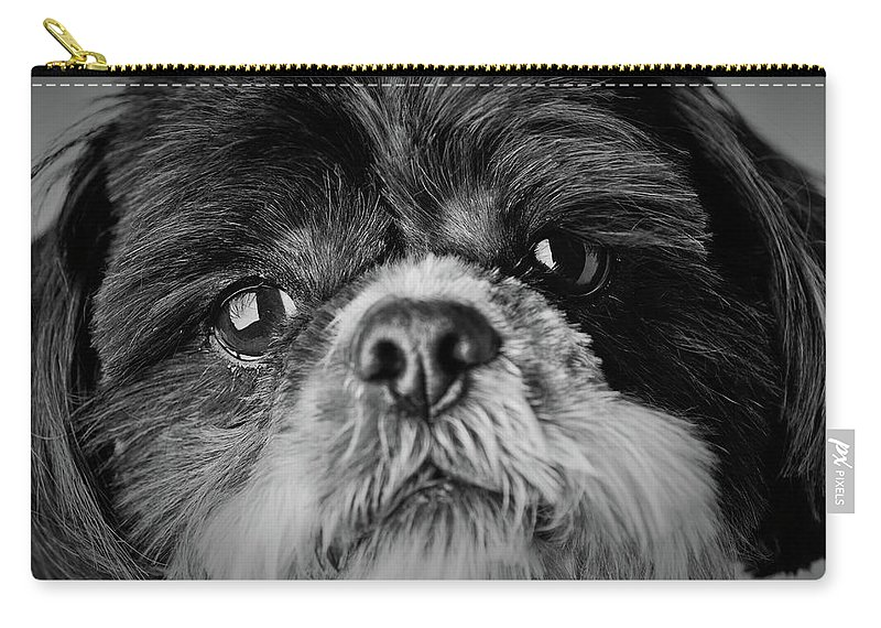 Shih Tzu Dog Carry-all Pouch featuring the photograph Max - A Shih Tzu Portrait by Onyonet Photo Studios