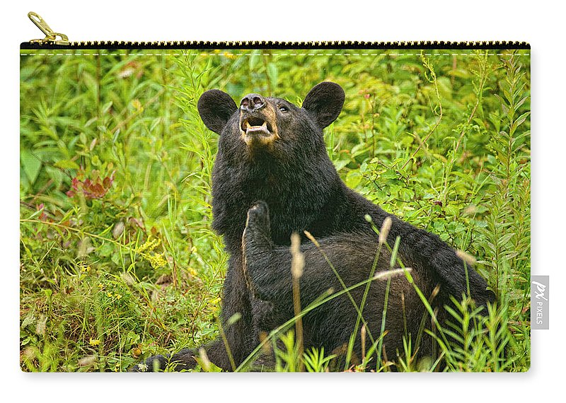 Timothy Flanigan Carry-all Pouch featuring the photograph Meadow Itch Bear by Timothy Flanigan