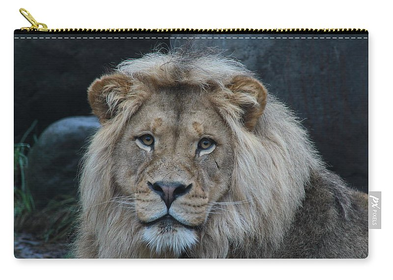 Lion Carry-all Pouch featuring the photograph Meal Time by Laddie Halupa
