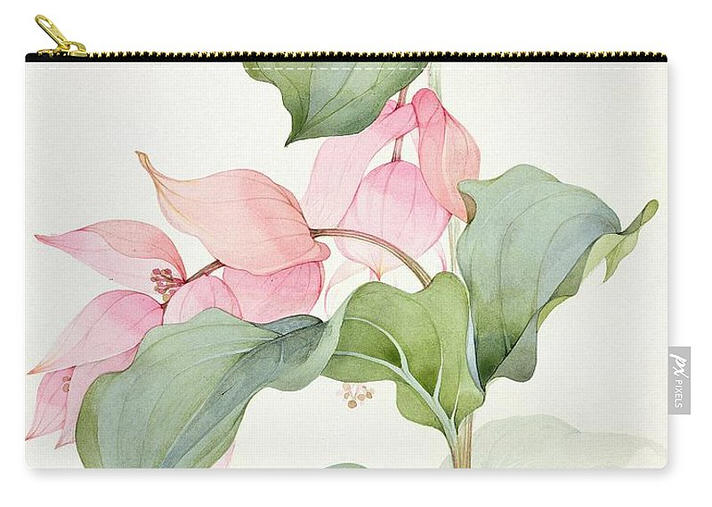 Medinilla Magnifica Carry-all Pouch featuring the painting Medinilla Magnifica by Sarah Creswell