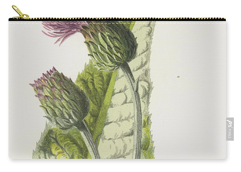Melancholy Thistle Carry-all Pouch featuring the painting Melancholy Thistle by Frederick Edward Hulme