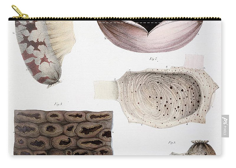 Historic Carry-all Pouch featuring the photograph Melanoma, Blood And Stomach by Wellcome Images