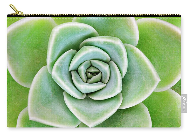 Echeveria Elegans Carry-all Pouch featuring the photograph Mexican Snowball Succulent by Neil Overy