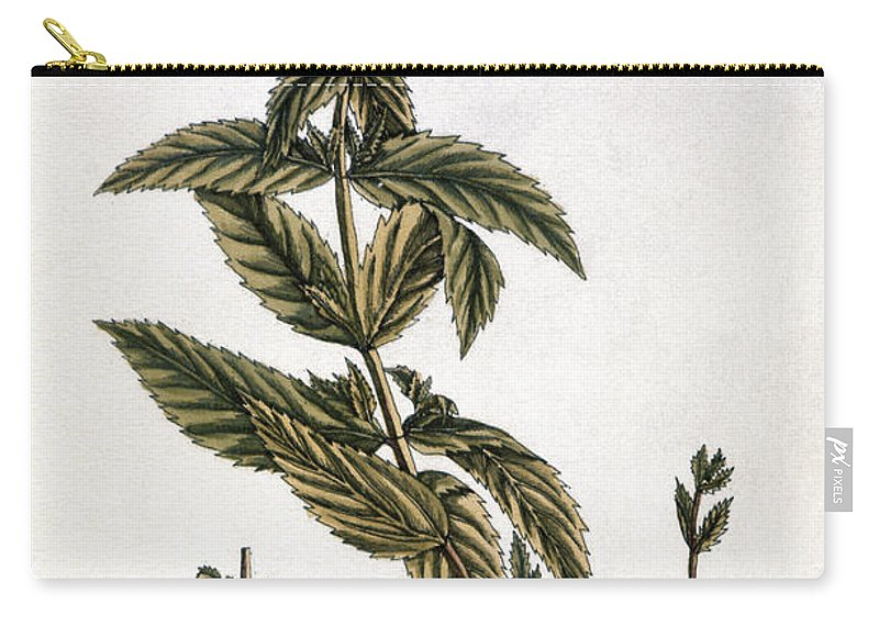 1730s Carry-all Pouch featuring the photograph Mint Plant, 1735 by Granger