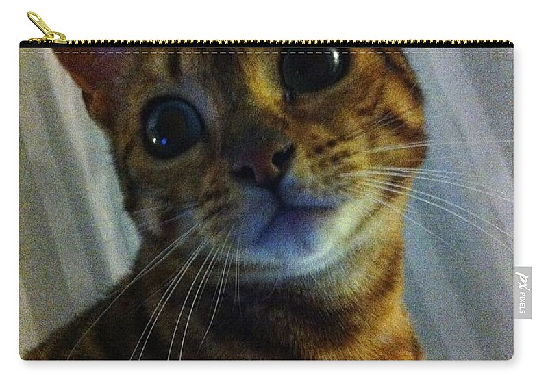 Mischievous Bengal Cat Carry-all Pouch featuring the photograph Mischievous Bengal Cat by Barbara Griffin