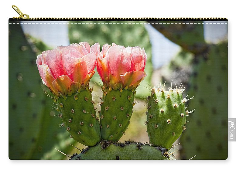 Prickly Pear Cactus Carry-all Pouch featuring the photograph Missing Triplet by Kelley King