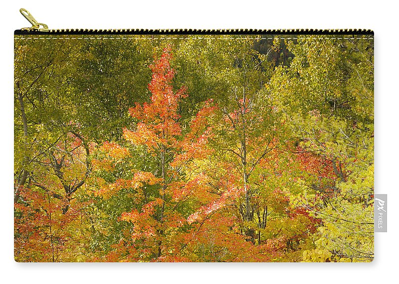 Tree Carry-all Pouch featuring the photograph Mixed Autumn by Phill Doherty