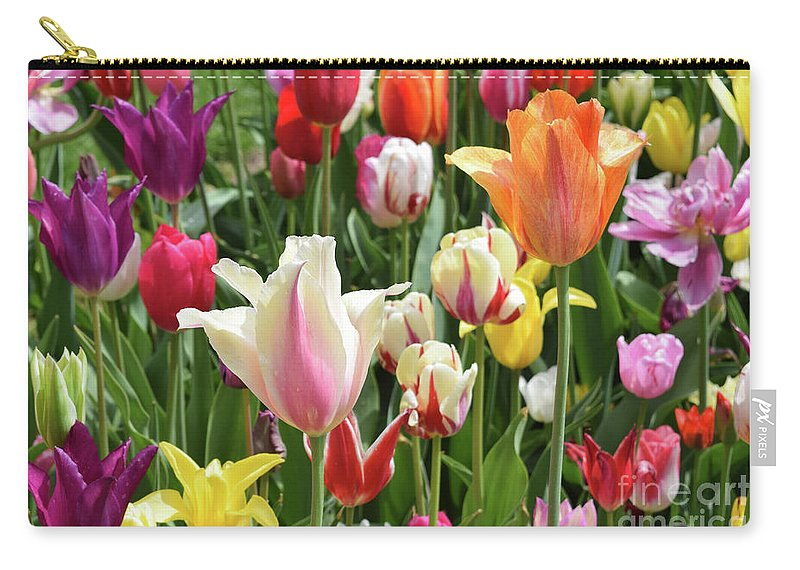 Tulips Carry-all Pouch featuring the photograph Mixed Tulips by Charles Norkoli