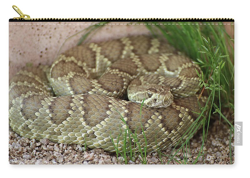 Rattlesnake Carry-all Pouch featuring the photograph Mojave Green by Erin Donalson