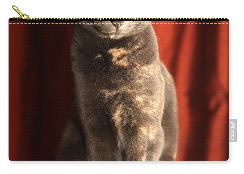 Cat Carry-all Pouch featuring the photograph Mollie by Amanda Barcon