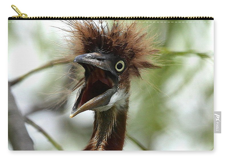 Immature Tri-colored Heron Carry-all Pouch featuring the photograph Momma I Am Hungry by Barbara Bowen