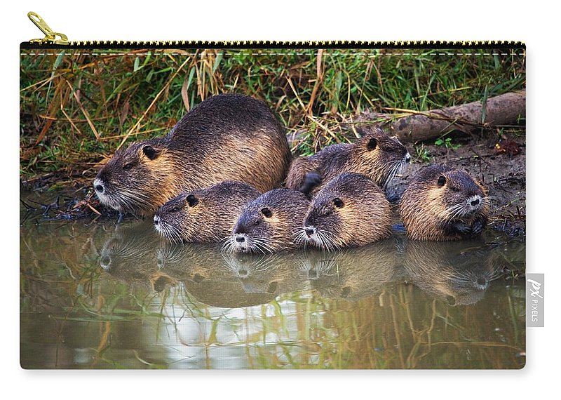 Nutria Carry-all Pouch featuring the photograph Morning Clean Up by Randall Ingalls