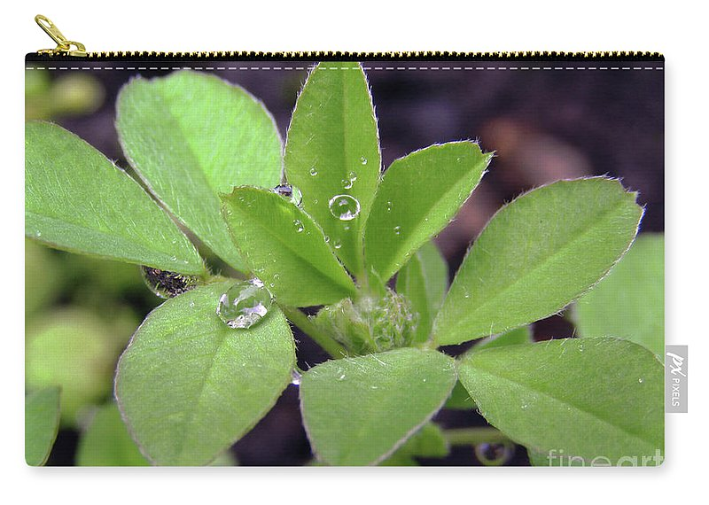 Rain Carry-all Pouch featuring the photograph Dewdrops On Leaves by Kim Tran