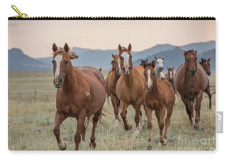 2017 Carry-all Pouch featuring the photograph Morning Run by Terri Cage