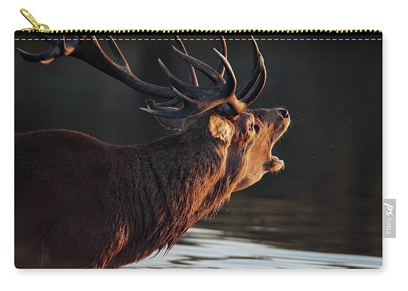 Stag Carry-all Pouch featuring the photograph Morning Stag by Ceri Jones