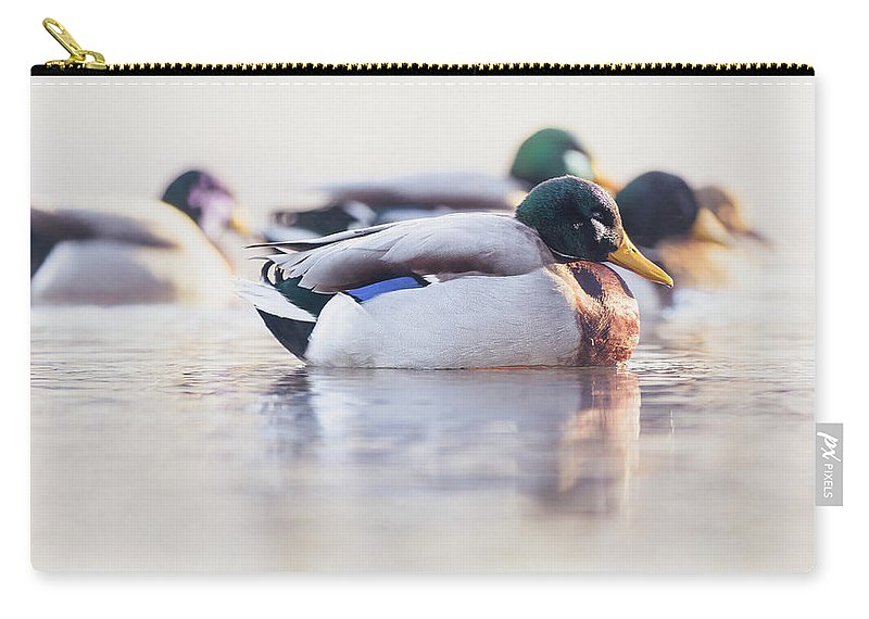 Duck Carry-all Pouch featuring the photograph Morning Swim by Annette Bush