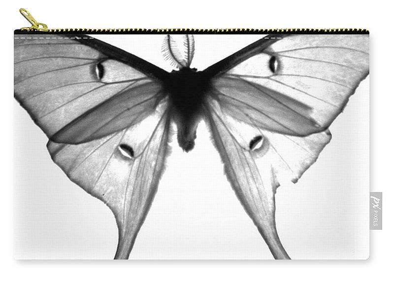 Moth Carry-all Pouch featuring the photograph Moth by Amanda Barcon
