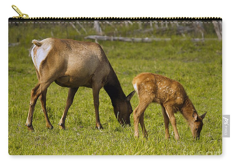 Elk Carry-all Pouch featuring the photograph Mother Elk And Fawn by Denise McAllister