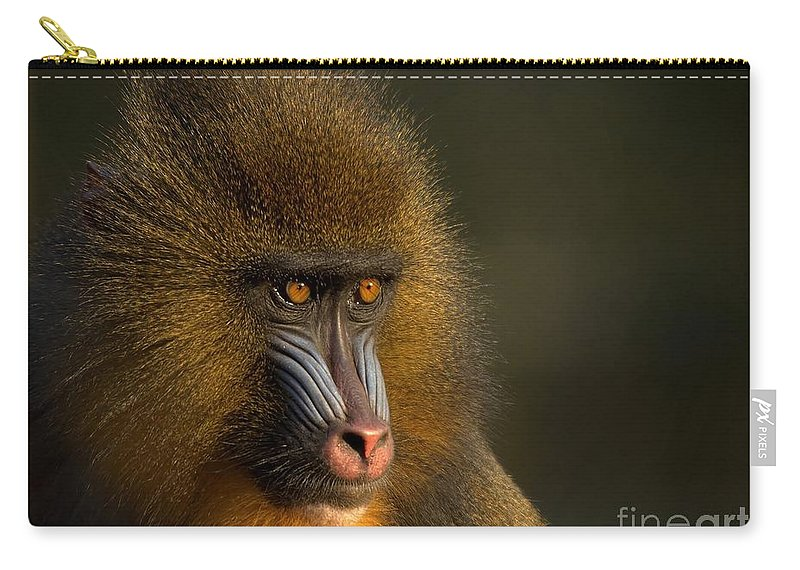 Wildlife Carry-all Pouch featuring the photograph Mother's Finest by Jacky Gerritsen