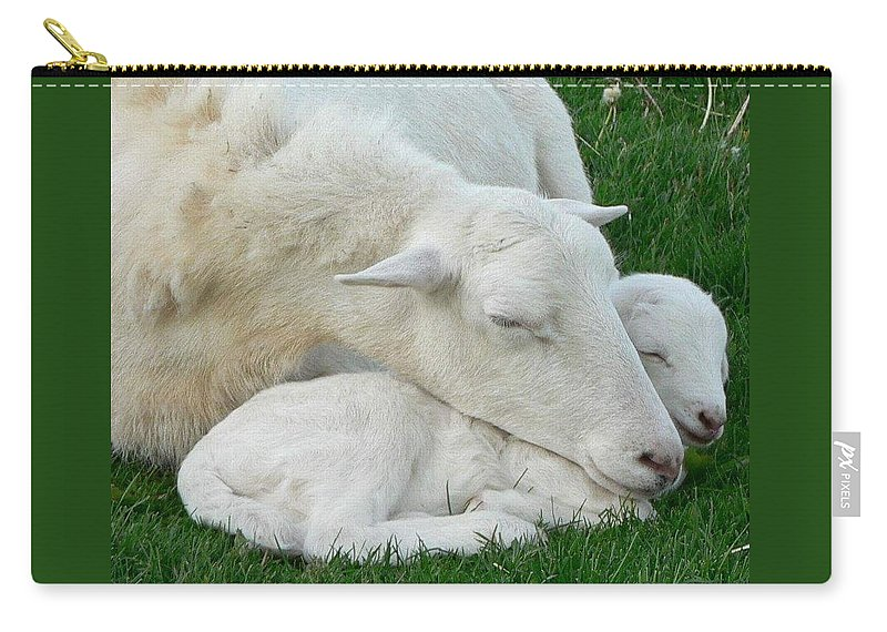 Sheep Carry-all Pouch featuring the photograph Mother's First Love by Melissa Haney