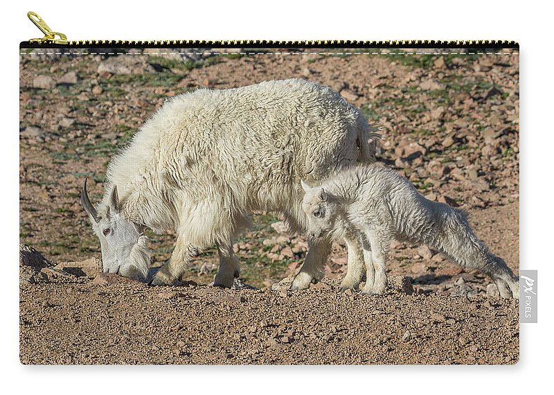 Mountain Goat Carry-all Pouch featuring the photograph Mountain Goat Kid Stretches By Mom by Tony Hake