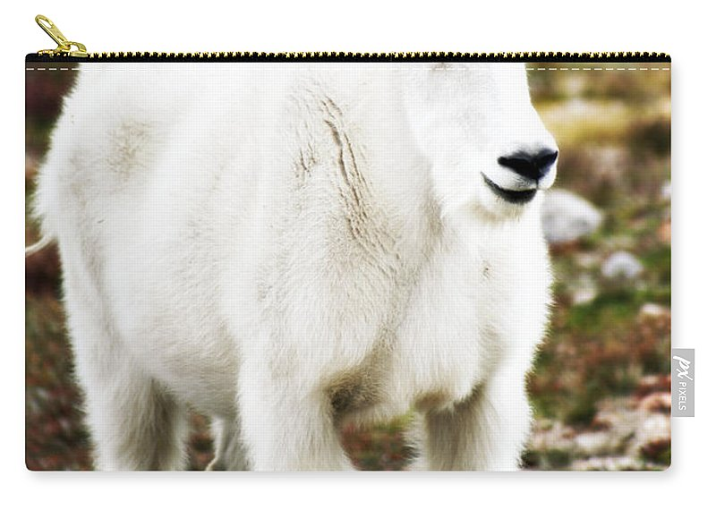 Animal Carry-all Pouch featuring the photograph Mountain Goat by Marilyn Hunt