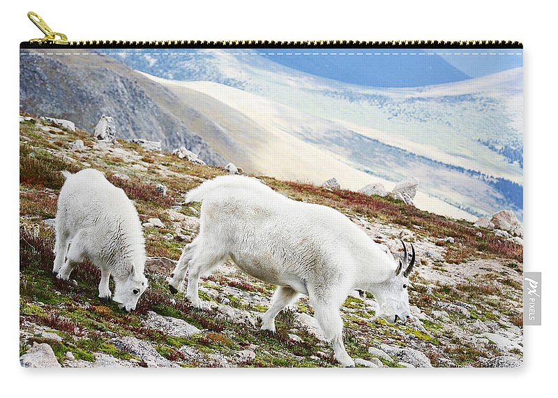 Mountain Carry-all Pouch featuring the photograph Mountain Goats 1 by Marilyn Hunt