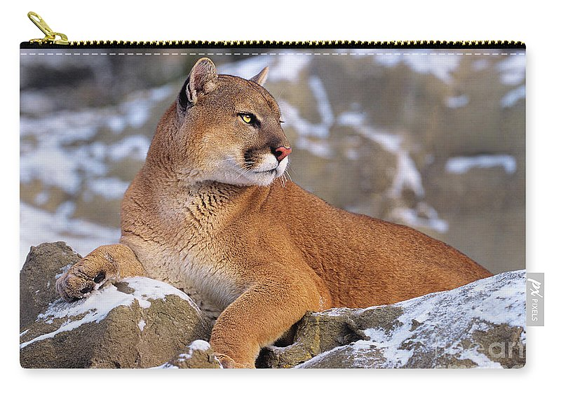North America Carry-all Pouch featuring the photograph Mountain Lion On Snow-covered Rock Outcrop by Dave Welling